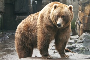 Wrestle a Bear (and Four Other Experiences that Improve Your Writing)